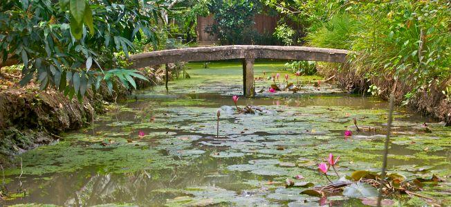 Lotus bridge